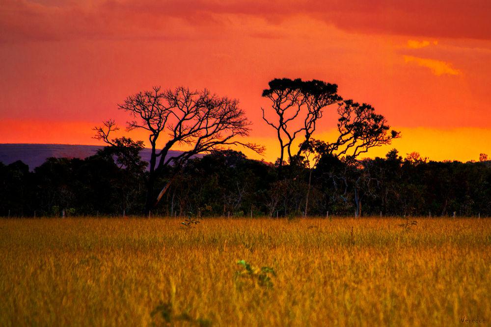 Photo in Landscape #tree #savanna #late sunset #sunset #nature #goiás #brazil #chapada dos veadeiros #alto paraíso de goiás