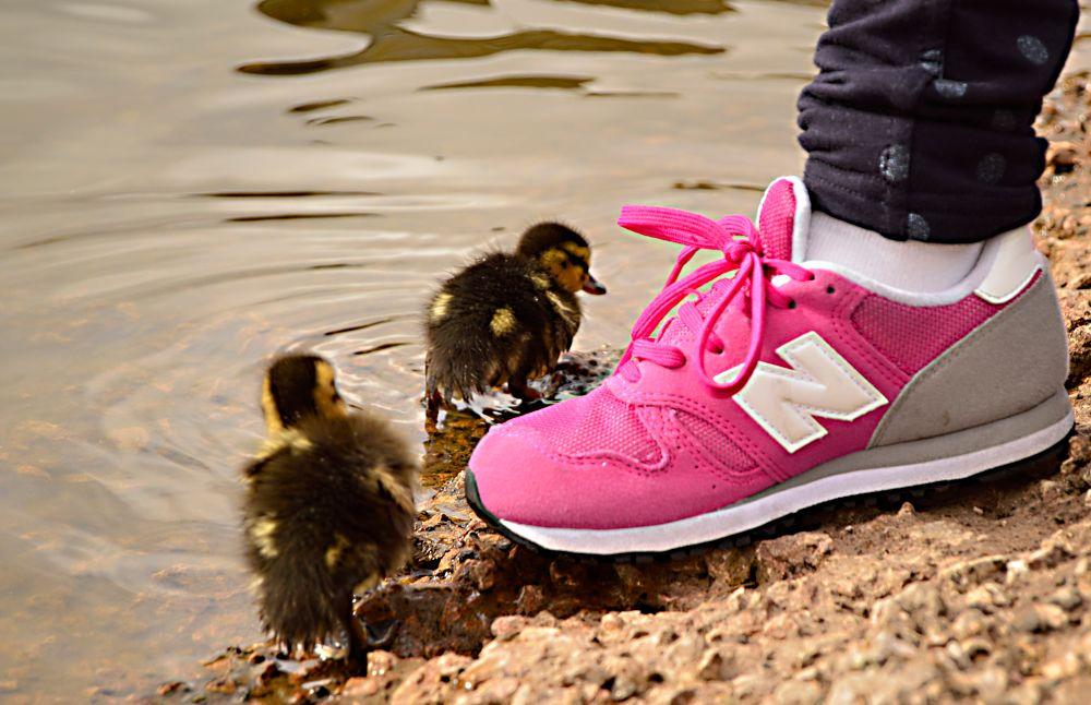 Photo in Animal #ducks #ducklings #water #foot #trainer