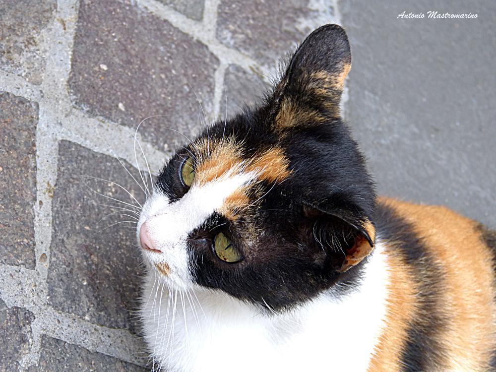 Photo in Random #il gatto umbro