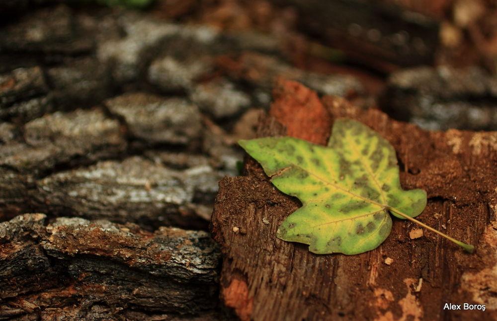 Photo in Nature #leaf #nature #autumn #fall #wood
