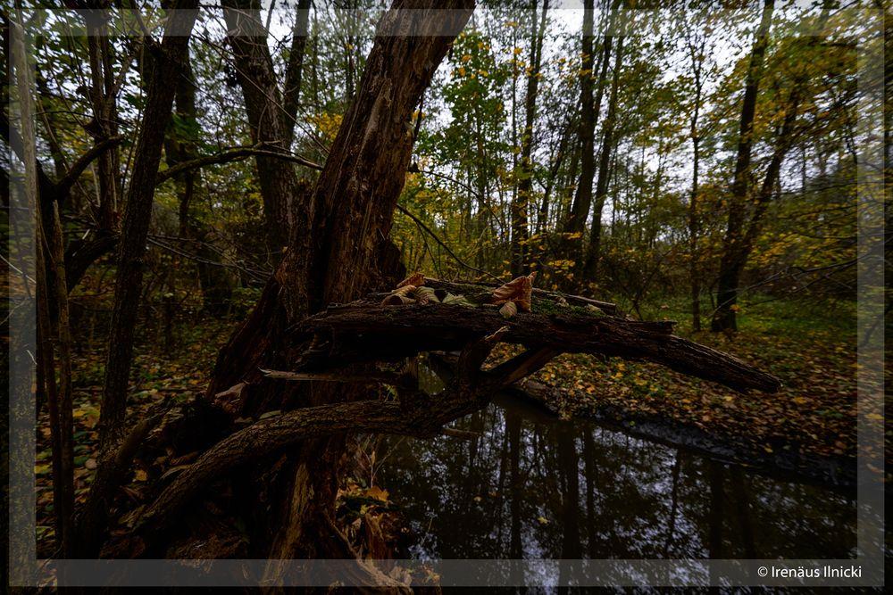 Photo in Landscape #natur wald herbst bäume flu