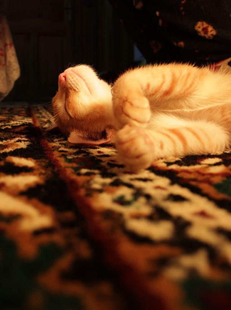 Photo in Animal #felix #cats #animals