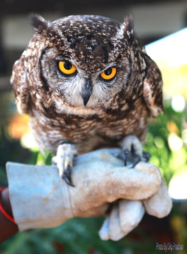 Photo in Animal #owl2monkey park - cape town