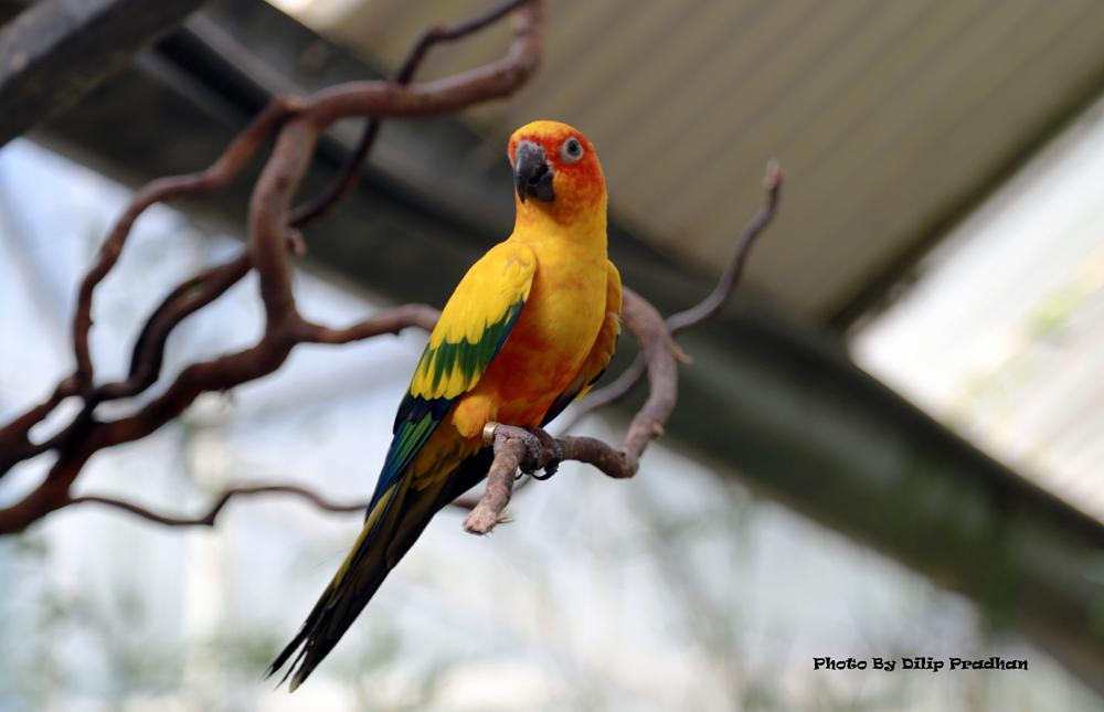 Photo in Animal #goldenparrotworld of birdsca