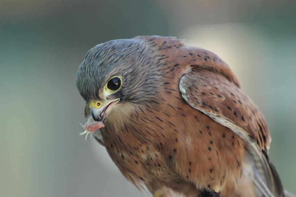 Photo in Animal #hawkworld of birdscapetowns