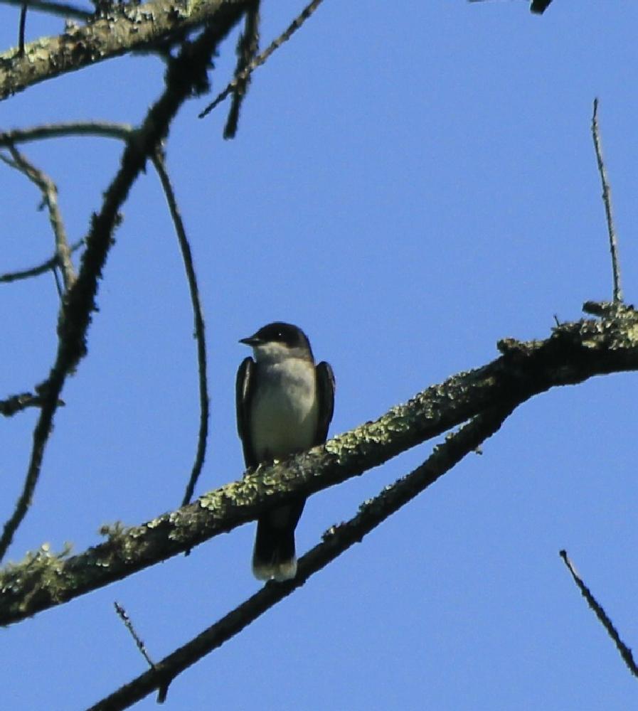 Photo in Animal #bird #wildlife #nature