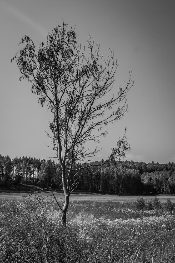 Photo in Black and White #tree #nature #landscape #forest #field #poland #nikon #d3200