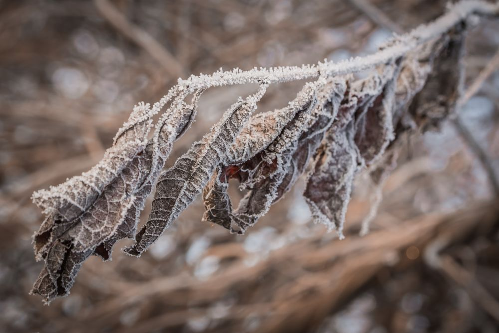 Photo in Nature #hoarfrost #frost #winter #ice #leaves #nature #macro #poland #nikon #d7100