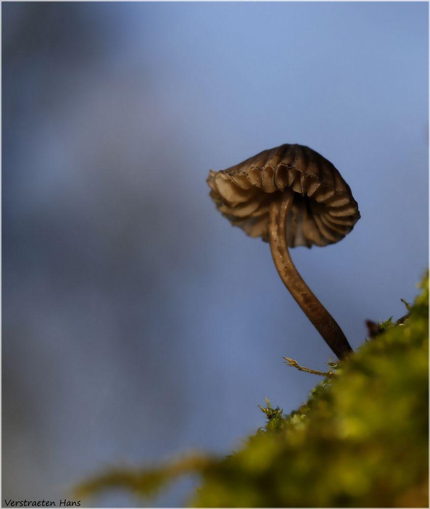 Photo in Nature #paddo #macro #nature