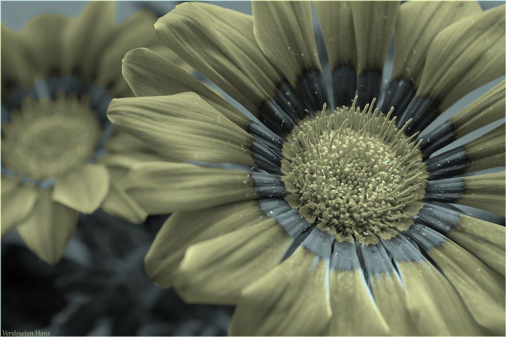 Photo in Macro #flower #pistil #blooming #dof #colourswap