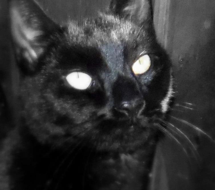 Photo in Random #cat #black cat