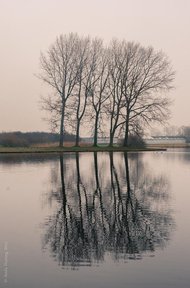 Photo in Nature #trees #reflection #water