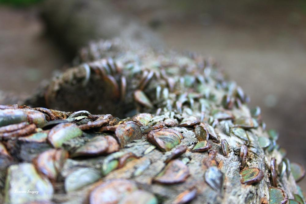 Photo in Nature #tarr steps #money in tree #canon #500d