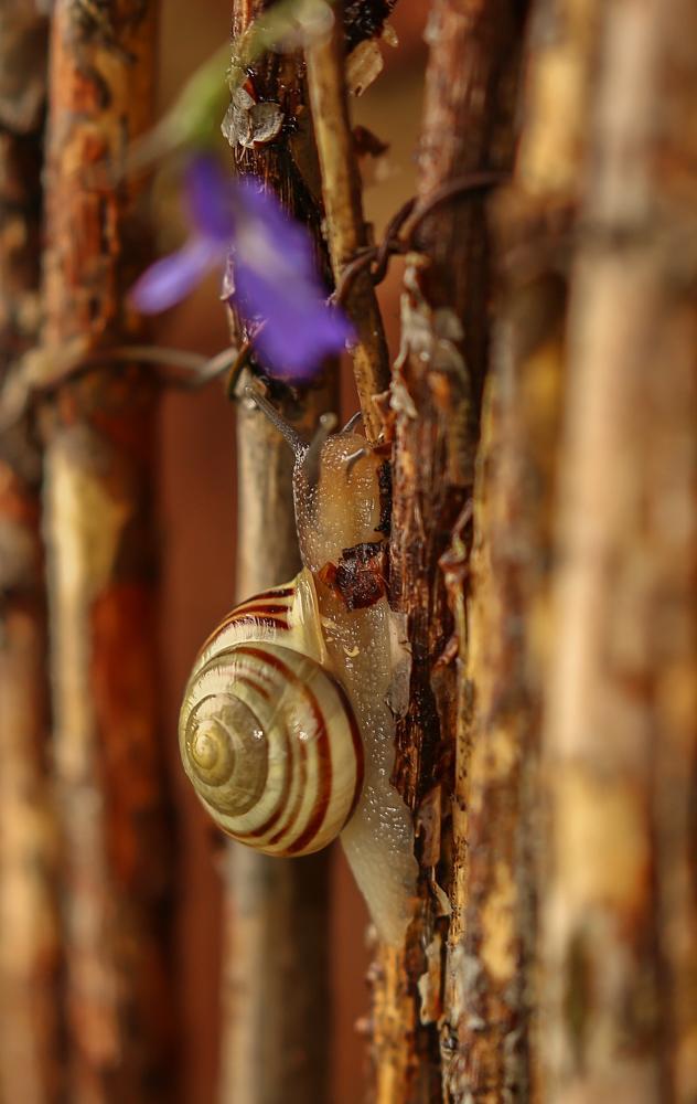 Photo in Animal #snail #nature #uk wildlife #canon #100-400 #invertabrate