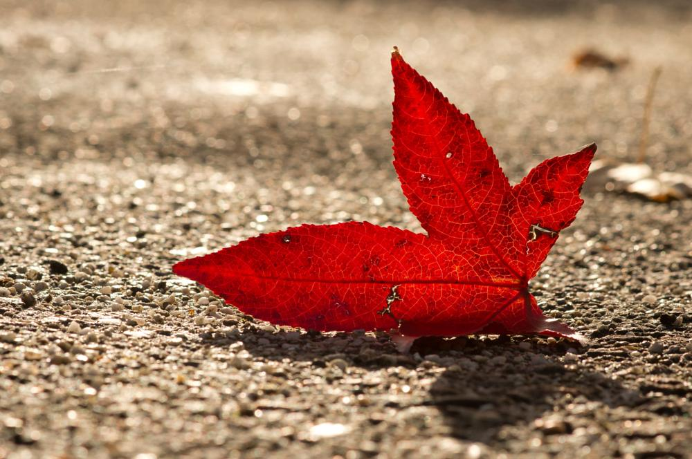 Photo in Nature #close up #red #leave #sony #minolta #a55