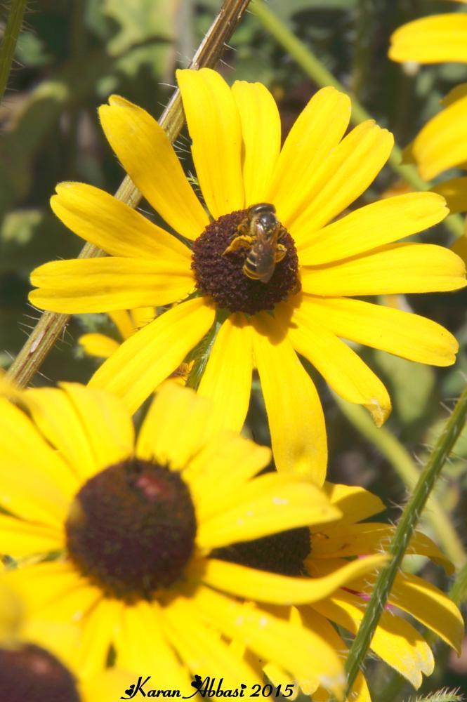 Photo in Macro #honey bees #bees #macro #flowers #summer