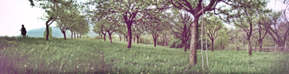 Photo in Nature #dream #nature #trees