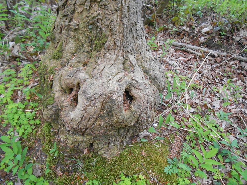 Photo in Landscape #tree #forrest #netherlands