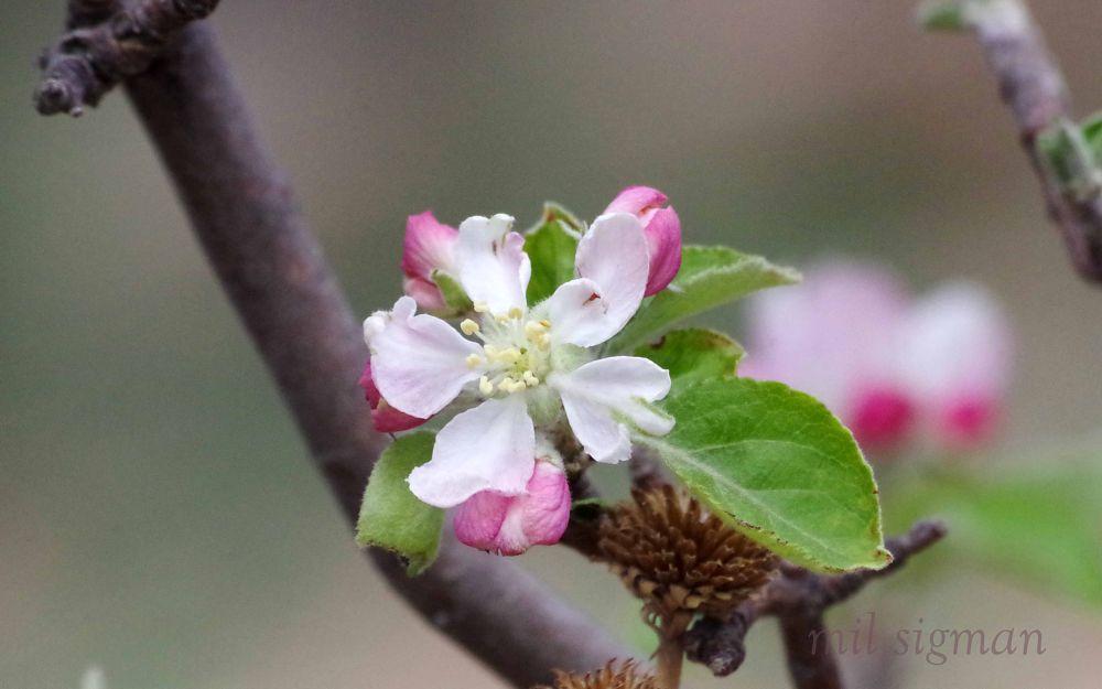 Photo in Macro #macro #nature #plant