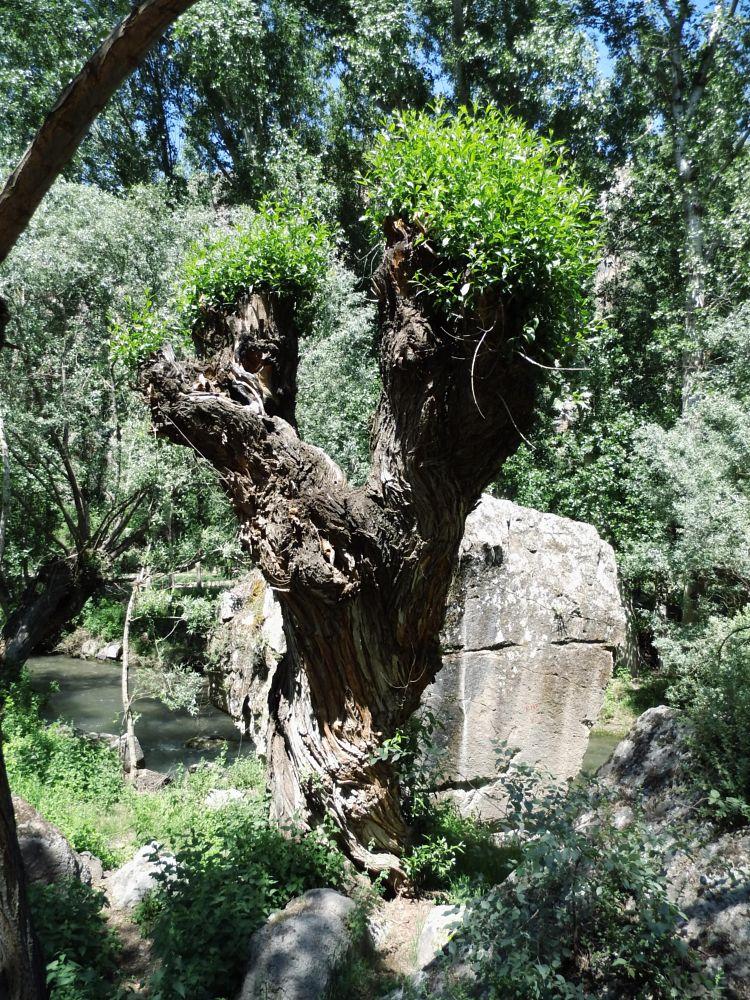 Photo in Nature #tree #valley #cappadocia #göreme #turkey