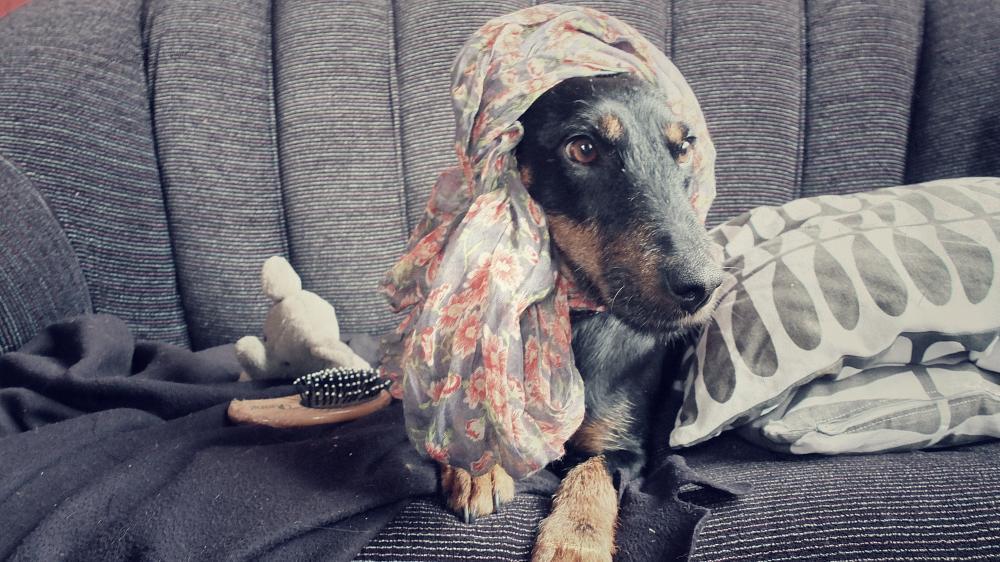 Photo in Animal #dog #animal