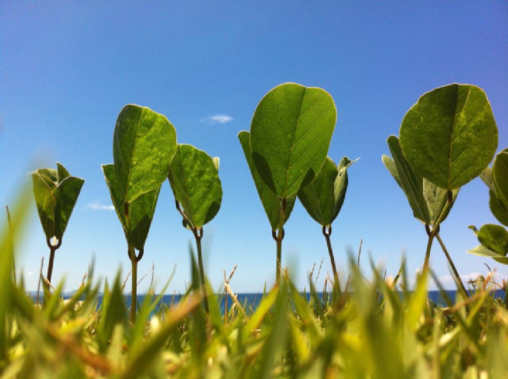 Photo in Landscape #travel #caribbean #dominican #sea #sky #grass #green
