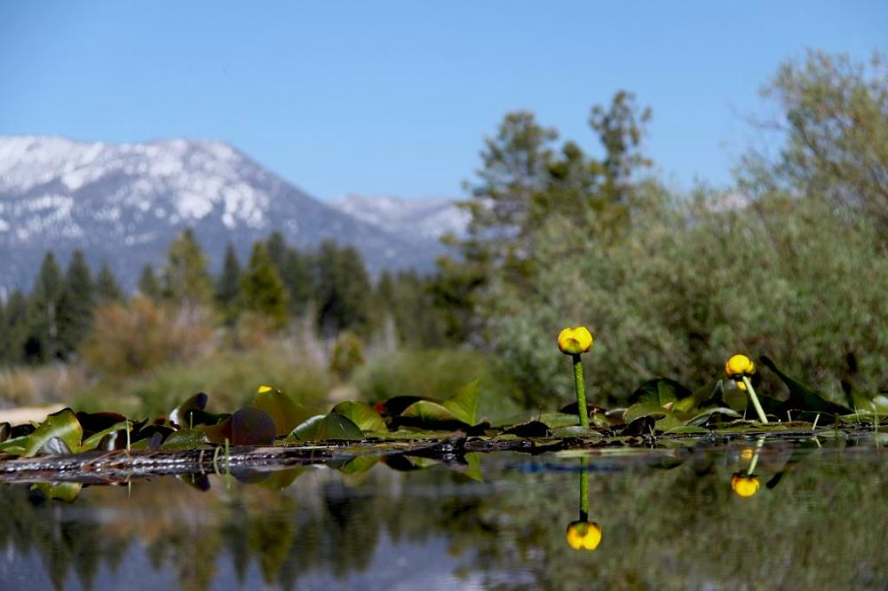 Photo in Landscape #travel #usa #california #lake #tahoe #mountain #waterlily #snow #sun