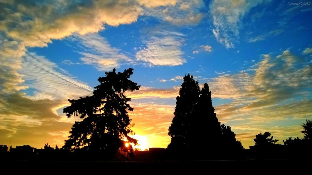 Photo in HDRI #tree #sky #malta #clouds #sun #sunset