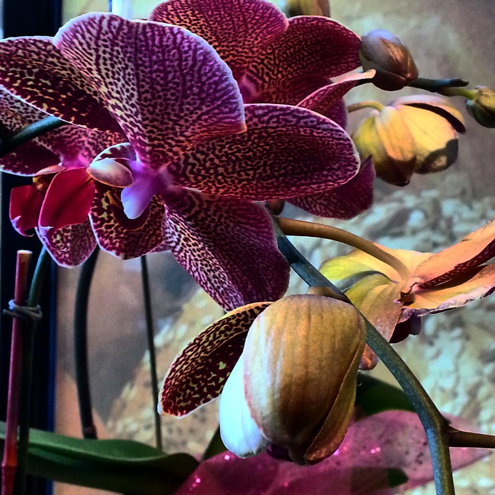 Photo in Nature #nature #flower #orchid