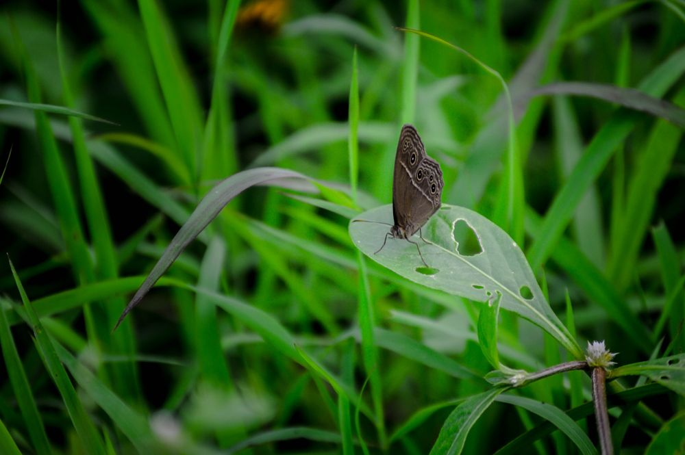 Photo in Nature #butterfly #wild #insect