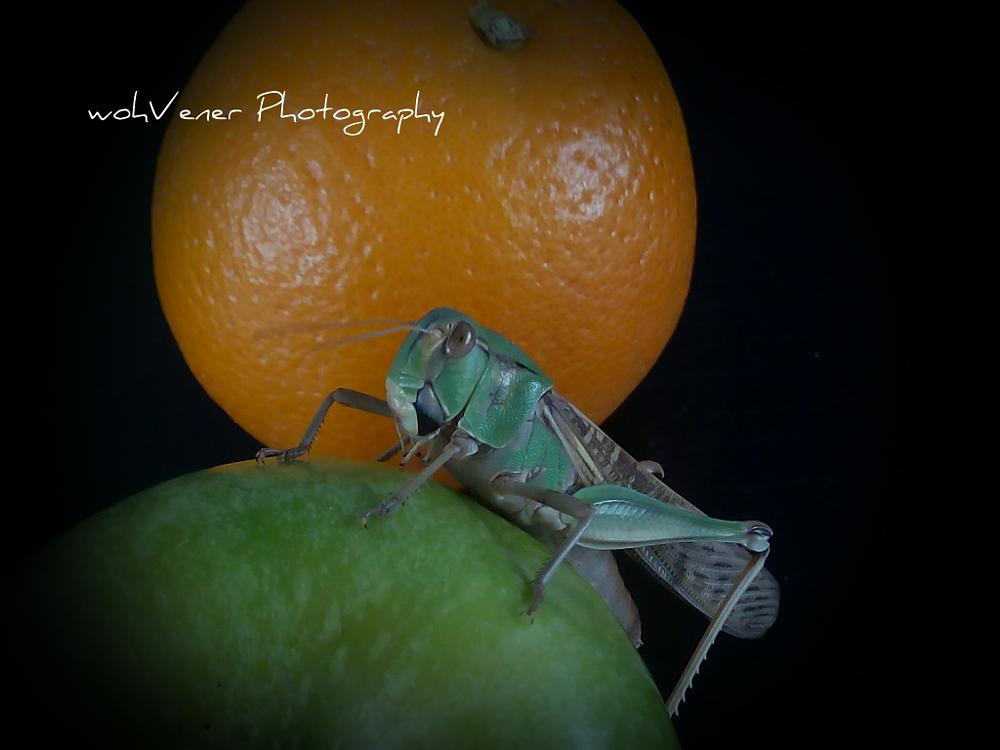 Photo in Random #bugs #insects #grasshopper