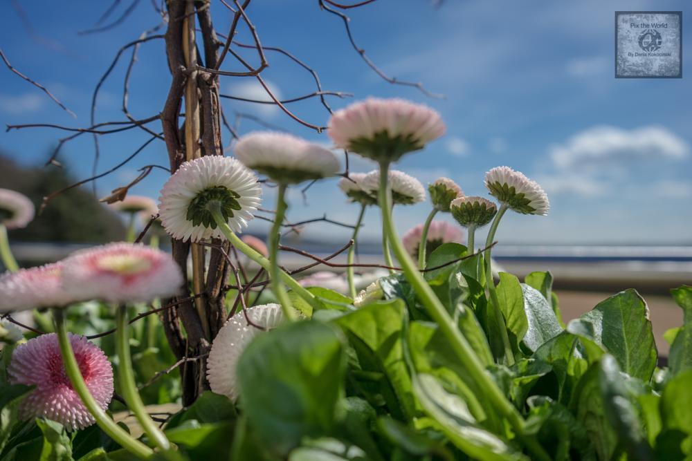 Photo in Macro #flower in #the #sun #schön #cool