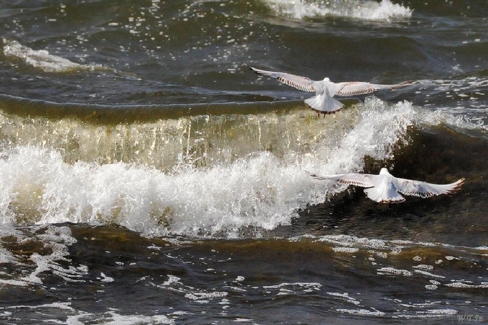 Photo in Sea and Sand #seagulls #baltic #sea #waves #summer