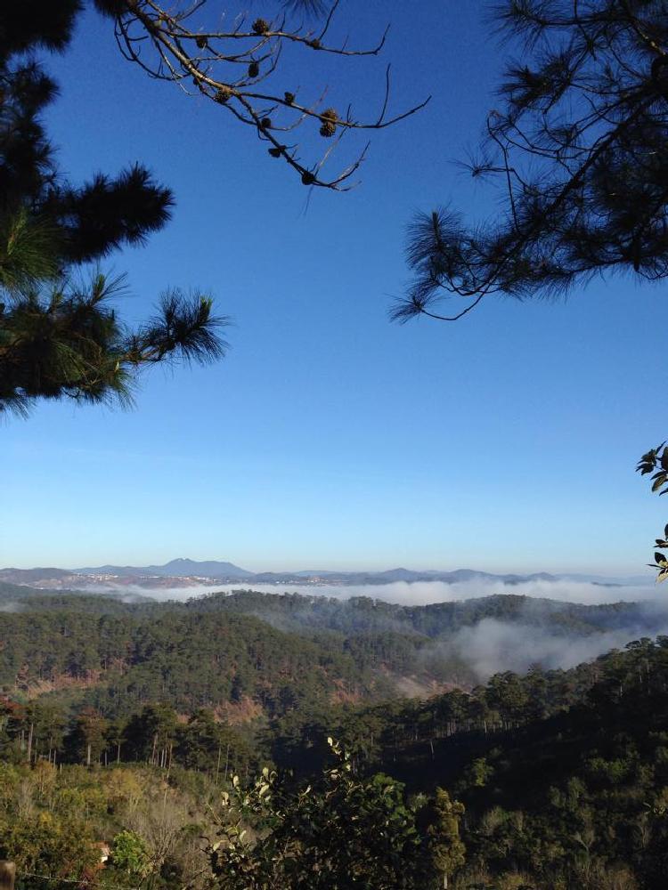 Photo in Landscape #pine