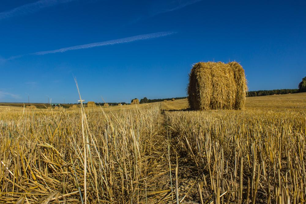 Photo in Landscape #field #straw #sky #blue #yellow #harvest