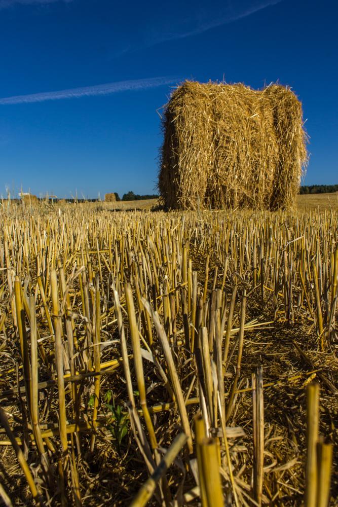 Photo in Landscape #straw #field #sky #blue #yellow