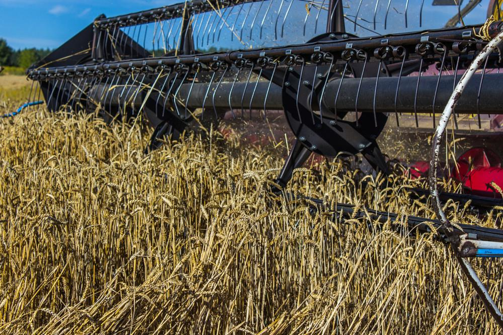 Photo in Landscape #harvest #field #yellow #combine
