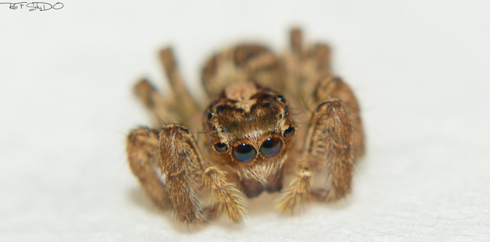 Photo in Macro #spider #macro #insect