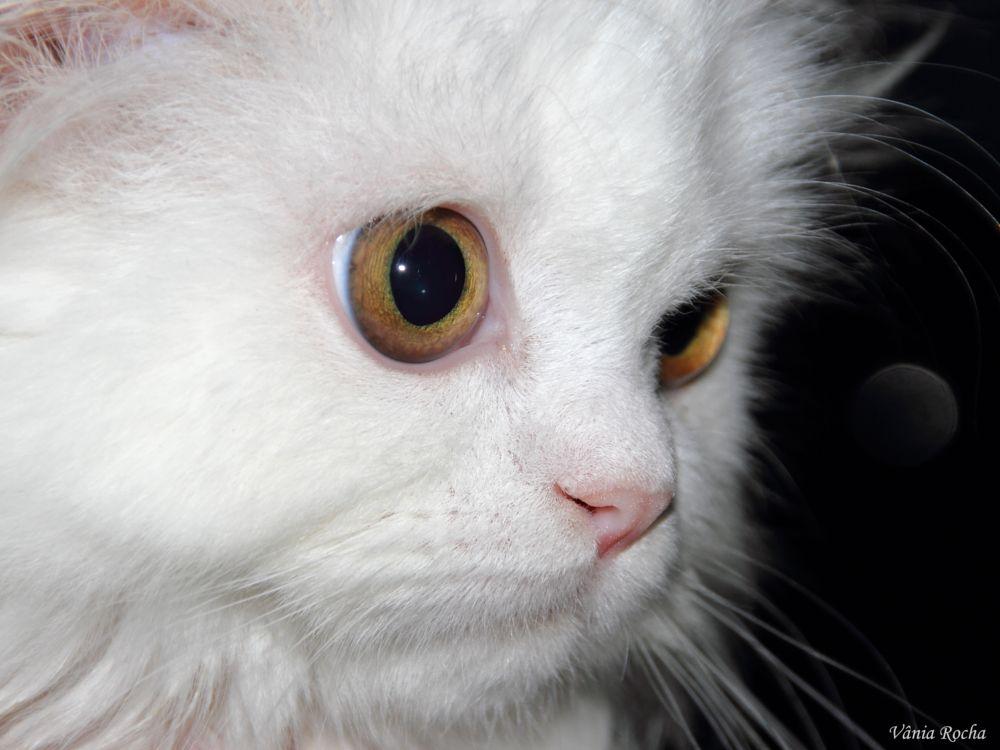 Photo in Animal #cat #beleza #animal