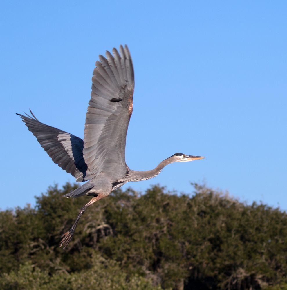Photo in Animal #wildlife #nature #birds #birds in flight