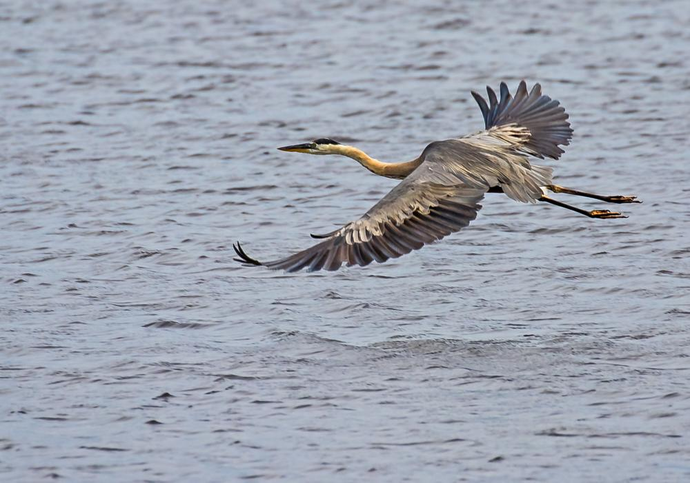 Photo in Animal #wildlife #nature #birds