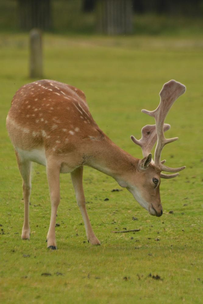 Photo in Animal #landscape #nature #wildlife