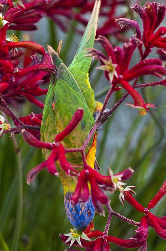 Photo in Random #bird #plant #daylight