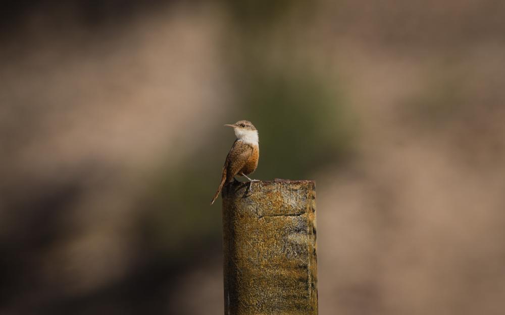 Photo in Animal #birdphotography
