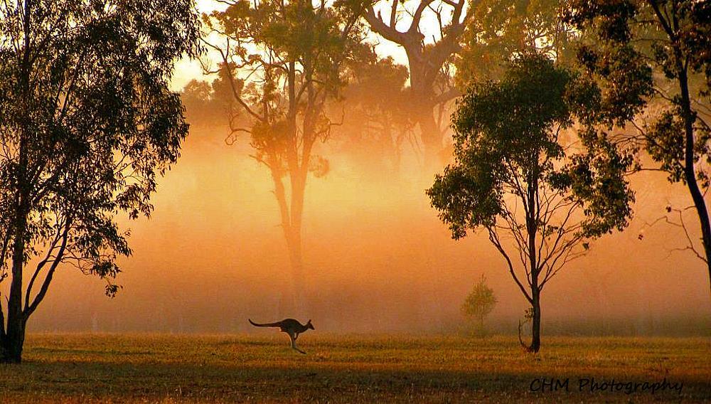 Photo in Landscape #rural #landscape #sunrise #animal
