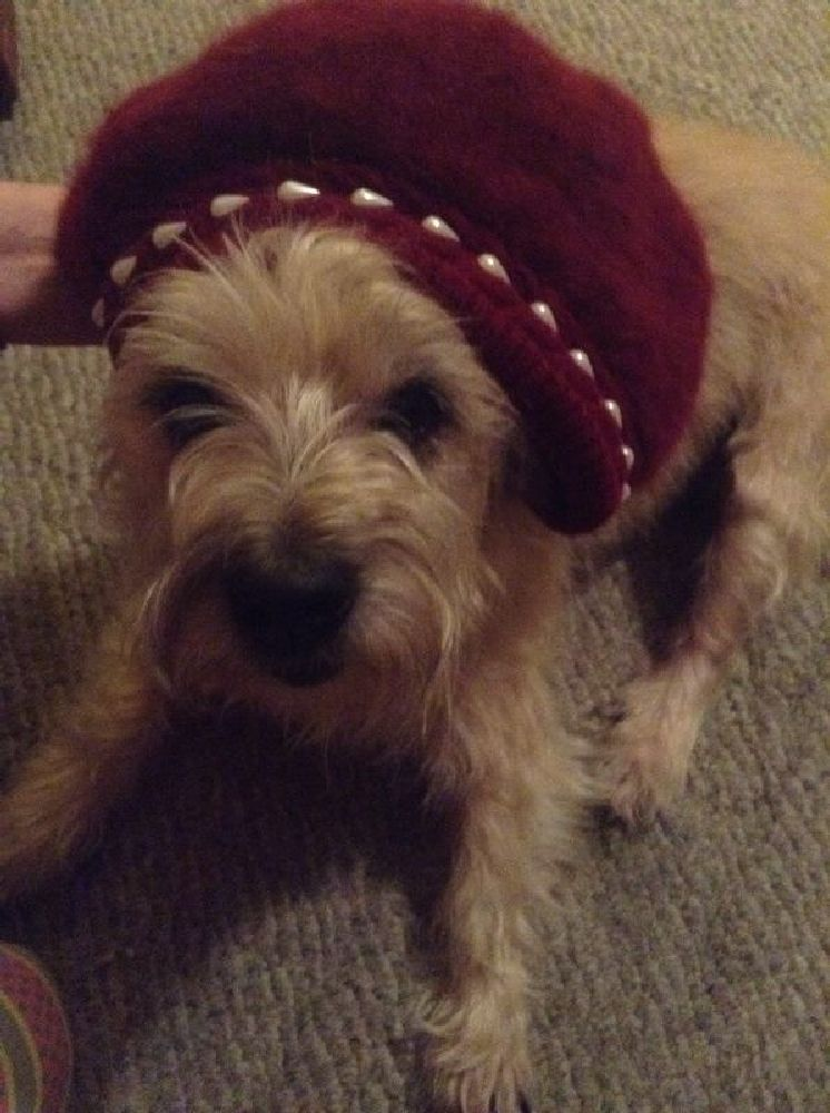 Photo in Animal #furbaby #merry #hat's off to you