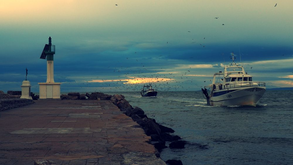 Photo in Sea and Sand #boats #sea #fishing boats #port #pier #birds