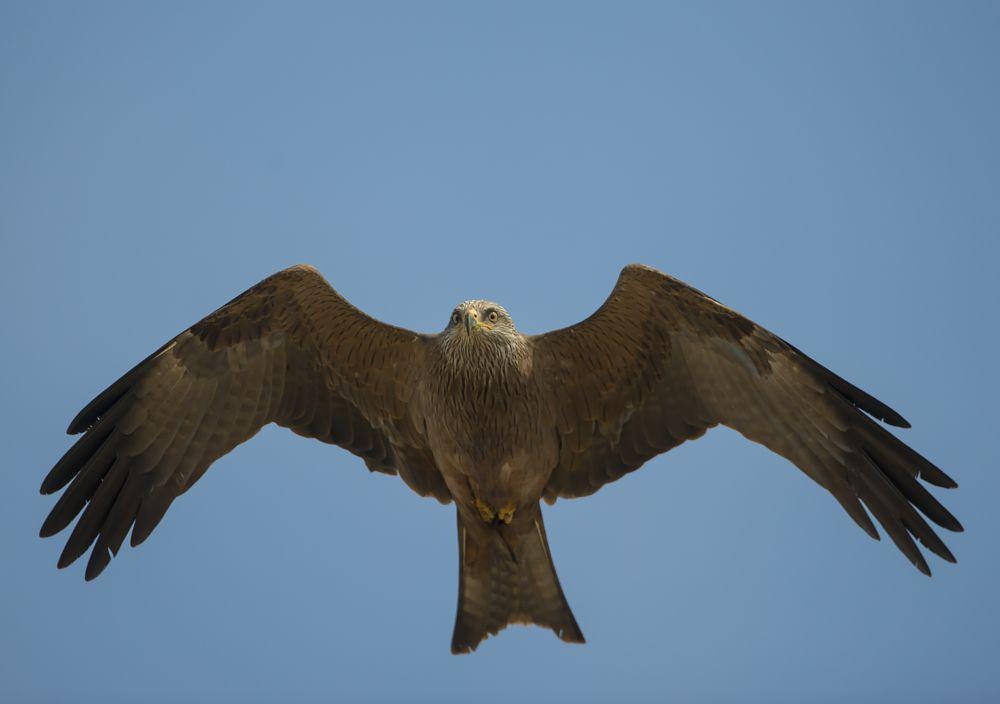 Photo in Nature #birds #nature #wildlife #animals