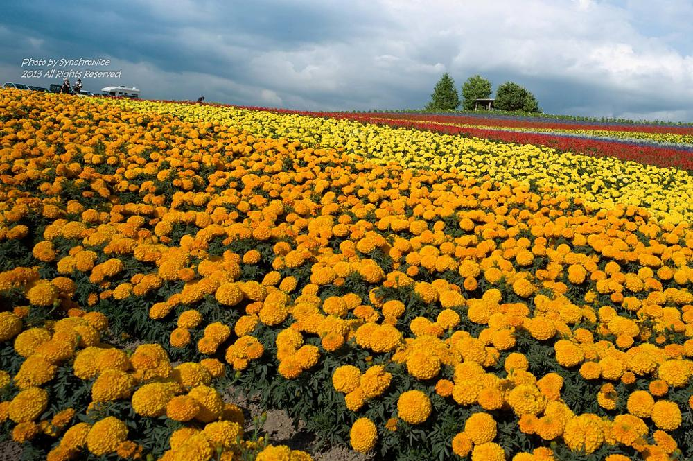 Photo in Landscape #hokaido #flower #nature #landscape