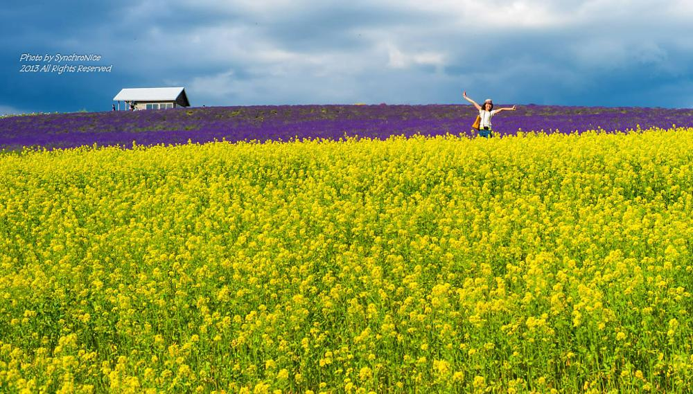 Photo in Random #hokaido #landscape #synchronice #flower field
